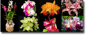 Our Nursery Is Hawaii On The Island Of Oahu Nestled In Lush Valley Palolo