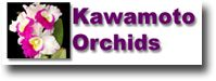 Kawamoto Orchids Nursery
